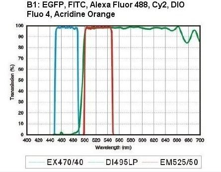 B1 LED Fluorescence module